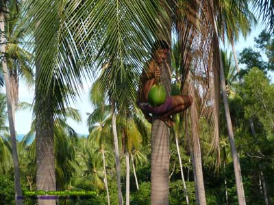 prix location villa vacances thailande noix coco maison chaweng kohsamui. Profitez de l'instant présent à Koh Samui Ile paradisiaque du sud est asiatique, ou cocotier rime avec volupté. Doux mélange de charme et de sérénité, tout est mis en ?uvre pour des vacances inoubliables. Apres une journée de ballade, amusement, rien de tel que retourner au calme dans votre villa au milieu de la cocoteraie et faire un petit saut dans votre piscine et prendre un petit verre dans votre piscine. Vous souhaitez un lieu de dépaysement, de repos et de tranquillité, d'activités et de visite, koh samui la généreuse est faite pour vous ! L'ile aux 1001 activités ravira les plus jeunes comme les familles: Quad, ferme aux crocodiles, aquarium de samui, jet-ski, plongée... Chacun y trouvera son compte.
